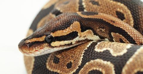 Fotolia (Kuvan käärme ei liity juttuun)