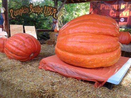 Pumpkin Sculpt USA