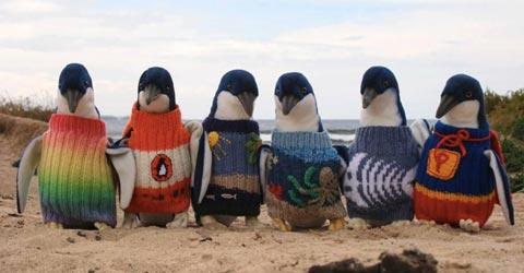 Phillip Island Penguin Foundation