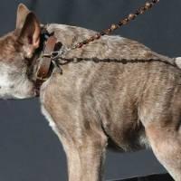 Maailman rumin koira 2015 Quasi Modo, Kuva: Splash