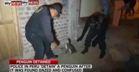 poliisipingviini30082015