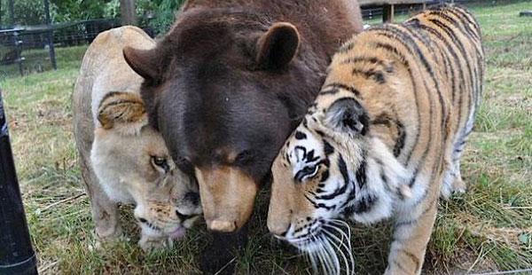 Noah's Ark Animal Shelter
