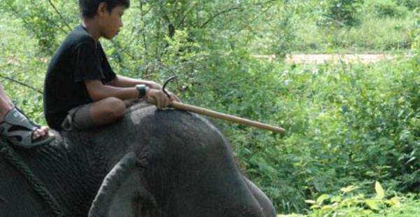 Elefanttisafari Thaimaassa, Kuva: Stara